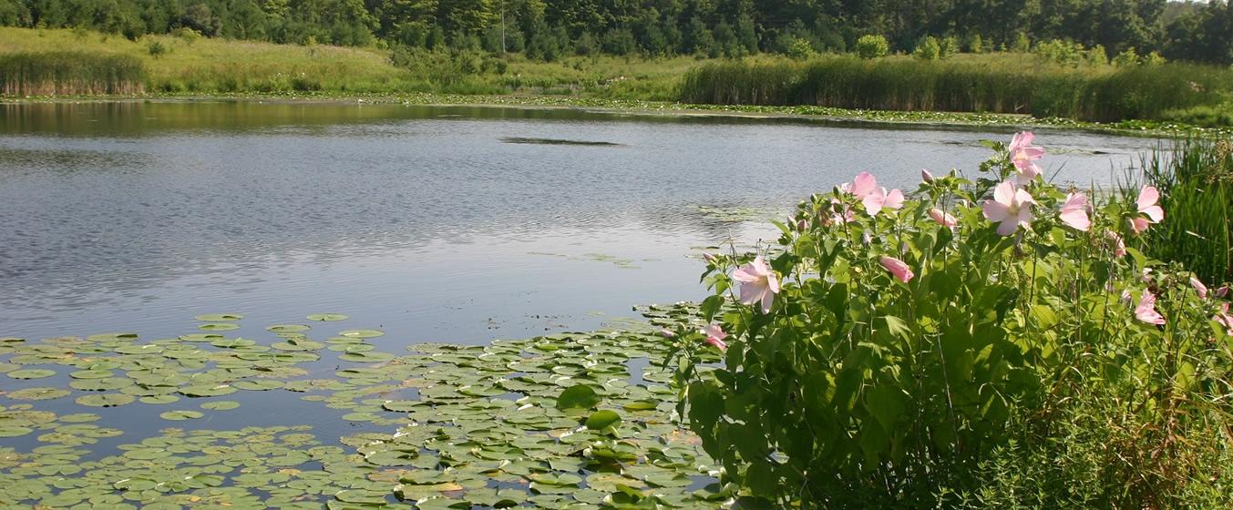 moberg_wetlands