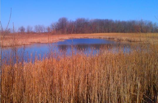wetland_restoration