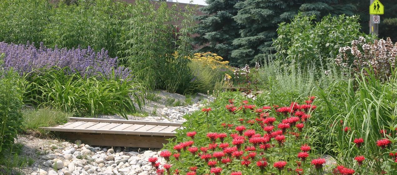 woodstock_rain_garden